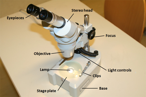 Parts of a stereo microscope
