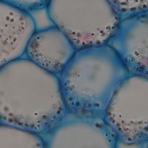 clean microscopy image