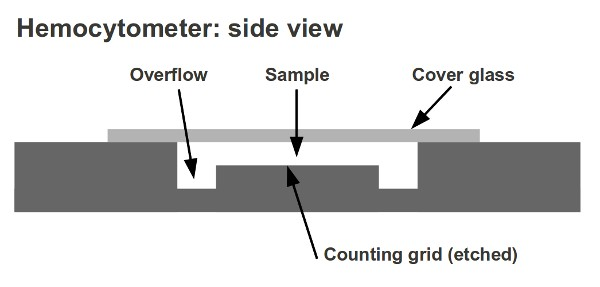 counting chamber, hemocytometer