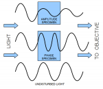 An amplitude specimen decreases the intensity (i.e. the amplitude) of the light. Phase specimens cause a phase shift of the light. This phase shift can not be detected with the unaided eye and requires a phase contrast microscope.
