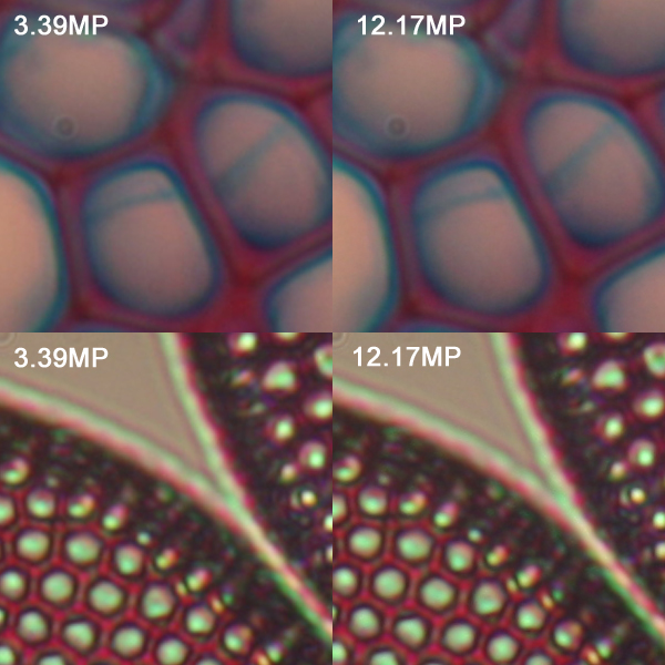 Comparison of resolution. There is practically no visible difference between 3MP and 12 MP. The limiting factor is therefore the microscope or specimen, and not the camera resolution.